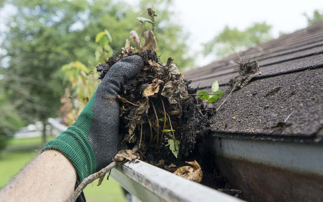 8 Gutter Maintenance Tips You Need to Know